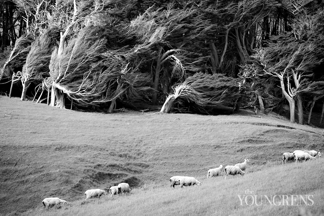 New Zealand landscape images, New Zealand South Island, Fox Glacier images, Queen Charlotte Sound images, Routeburn Trek images, Haast beach images