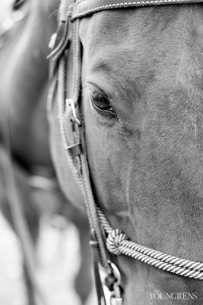 hcc ranch montana, scenic montana images, montana landscape images, montana horse images, ranch images, montana images on film, medium format film images, medium format landscape images, contax 645, kodak portra 400 film